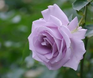 敬老の日に贈りたい!定番のお花とは?おすすめの花言葉は何?