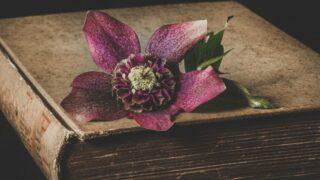 クリスマスローズの花言葉は怖い?合格祈願の花として贈られる理由