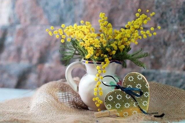 ミモザの開花時期は何月?選び方や飾り方のコツを花屋が紹介します2